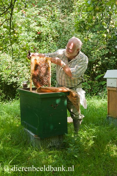 Bijen In De Winter Een Volk Kan Tot 35 C Overleven 1